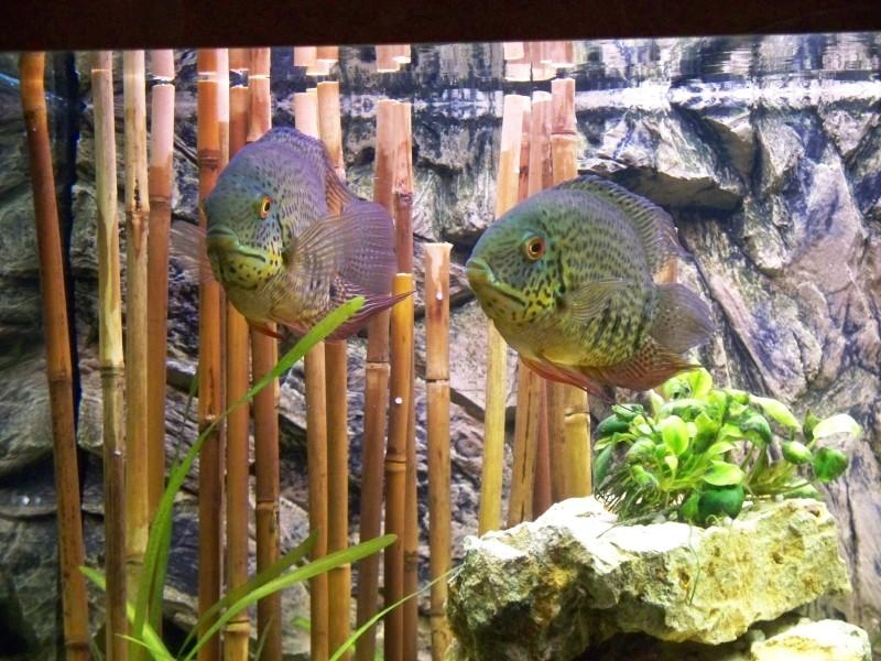Community Artikel Bambus Im Aquarium Aqua4you De