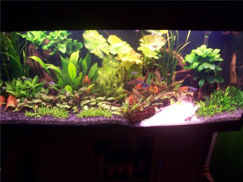 Aquarium Pflanzen Boden Wenig Licht Malawi Aquarium Gebundeltes