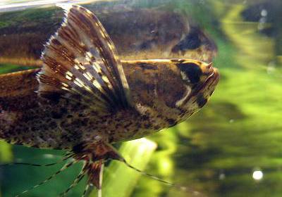 kleine aquarium fische arten