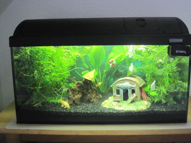 community mein aquarium