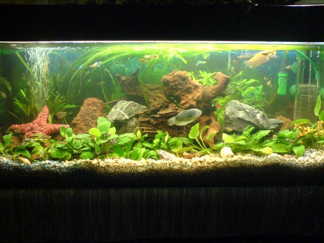 Community mein aquarium for Fadenfische zucht