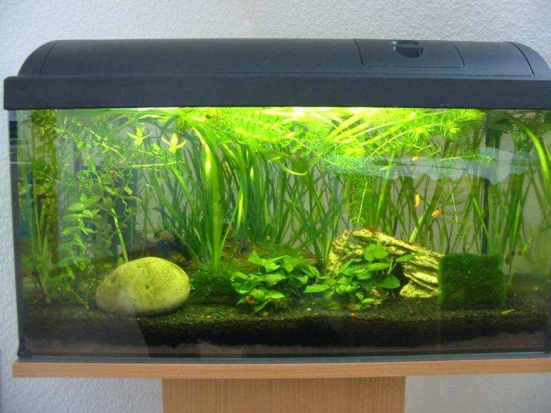 Community mein aquarium for Aquarium innenfilter