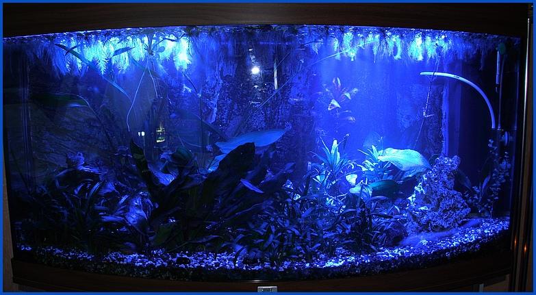 creative lights aquarium mondlicht 2 x 30 cm led lichtleiste dimmer komplettset inkl. Black Bedroom Furniture Sets. Home Design Ideas