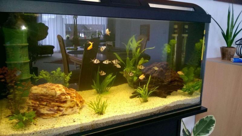 Bild 1 bild 2 möchte hier mal mein erstes aquarium
