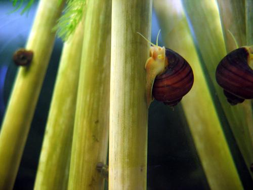 bambusroehrchen für aquarien