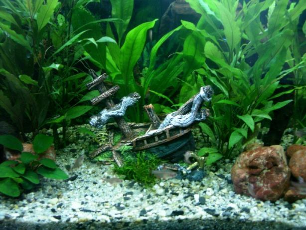 Community: Mein Aquarium | aqua4you.de