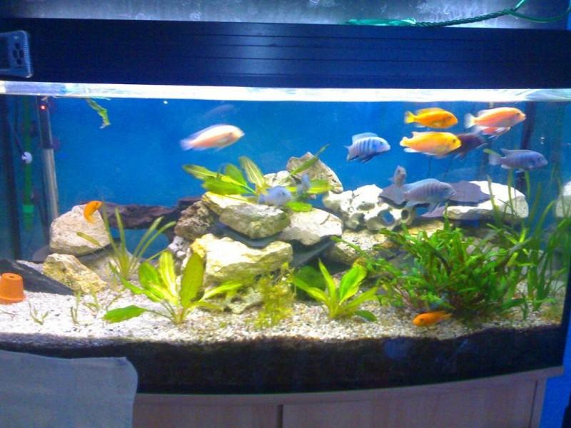 aquarium mit barschen