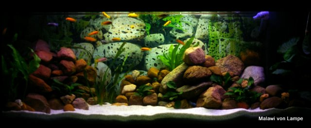Community mein aquarium for Aquarium 120x40x50
