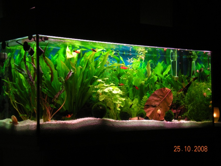 community mein aquarium