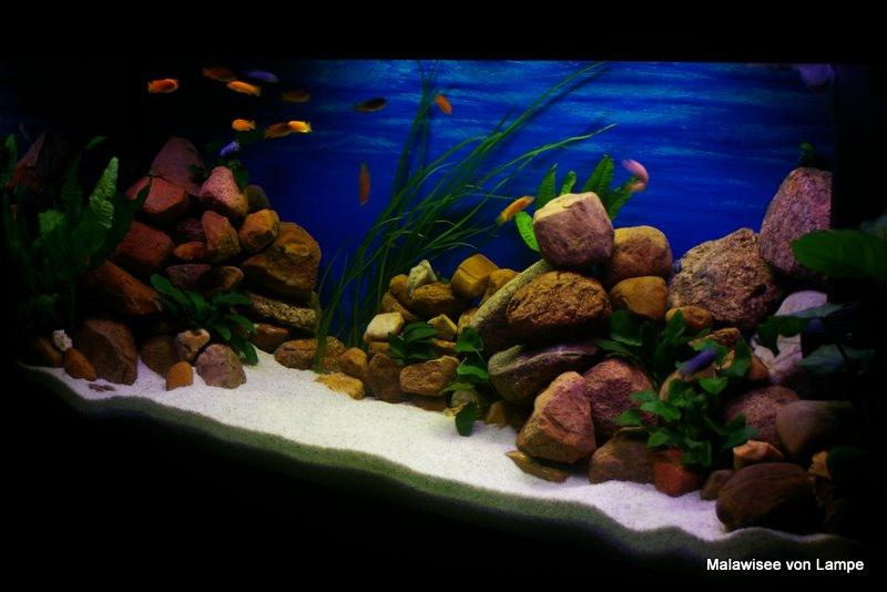 muss aquarium beleuchtung eine pause haben