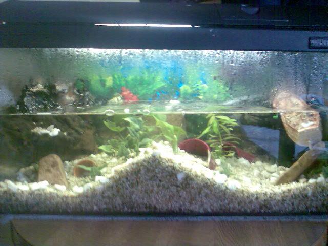 Community mein aquarium for Aquarium einrichtung