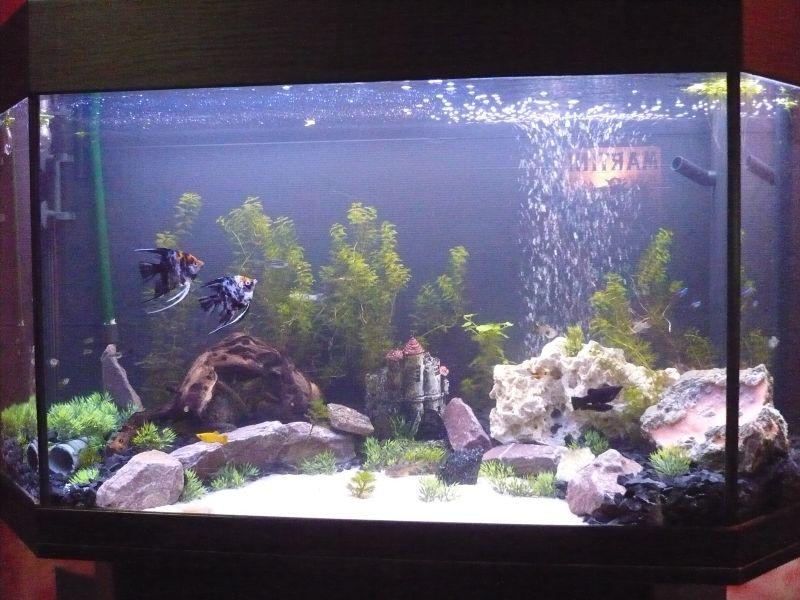 die besten 25 aquarium kies. Black Bedroom Furniture Sets. Home Design Ideas