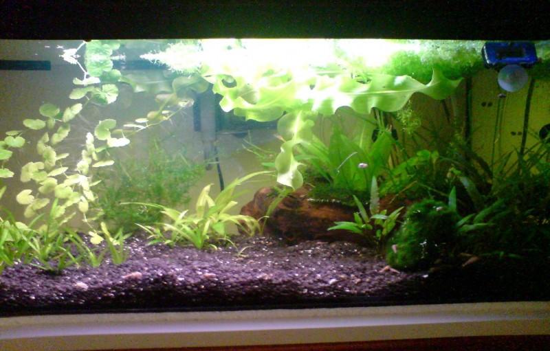 wie lange soll man licht im aquarium anlassen aquarium von paul b eine lange geschichte wie du. Black Bedroom Furniture Sets. Home Design Ideas