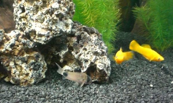 21 03 08 12 55 unser aquarium nochmal unser aquarium