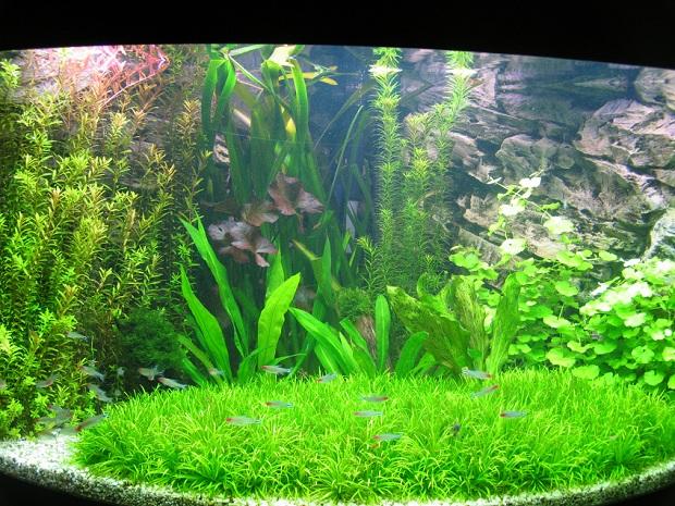 Community Mein Aquarium Aqua4you De