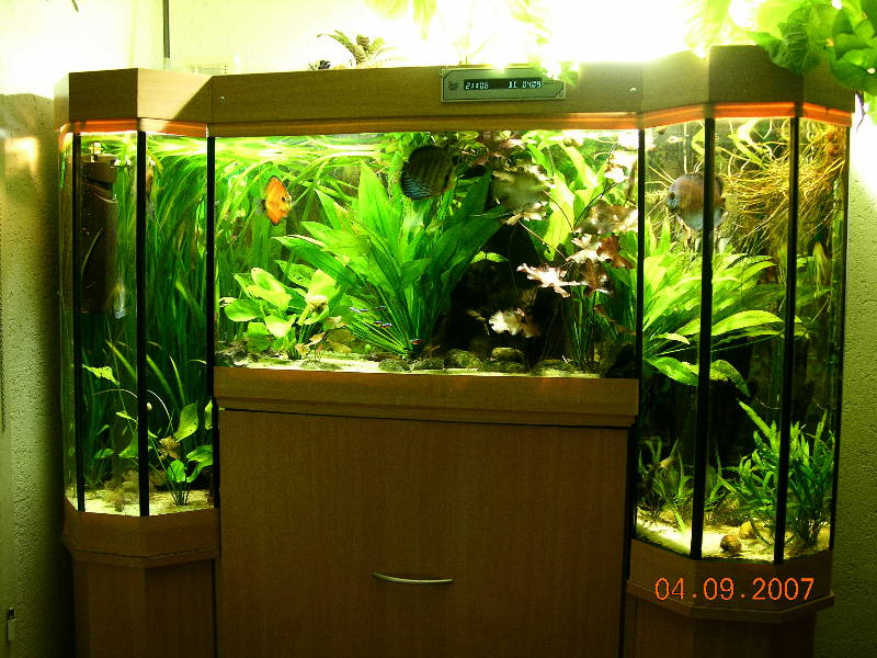community mein aquarium. Black Bedroom Furniture Sets. Home Design Ideas