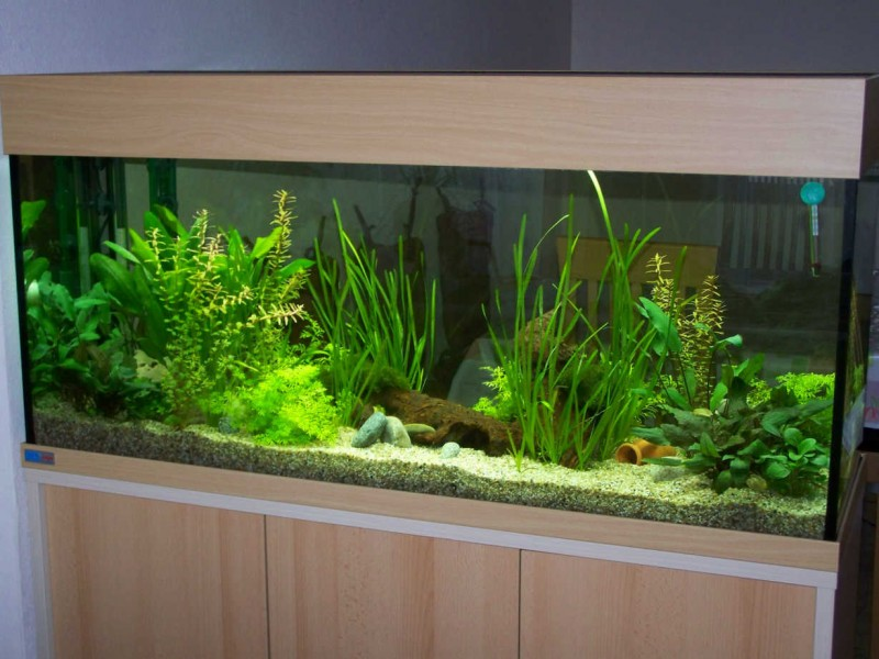 aquarium einrichten anf nger einrichten eines aquariums aquascaping f r anf nger teil 5 auf. Black Bedroom Furniture Sets. Home Design Ideas