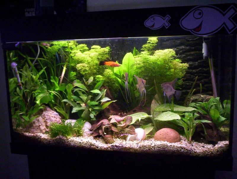Community mein aquarium for Aquarium einrichtungsideen