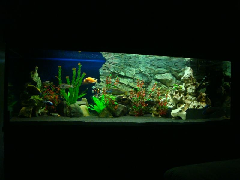 Community mein aquarium for Blauer dekosand