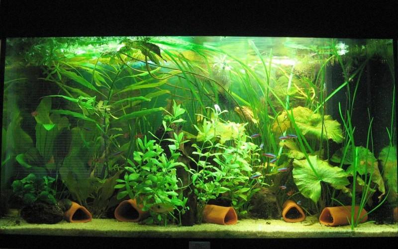 community mein aquarium. Black Bedroom Furniture Sets. Home Design Ideas