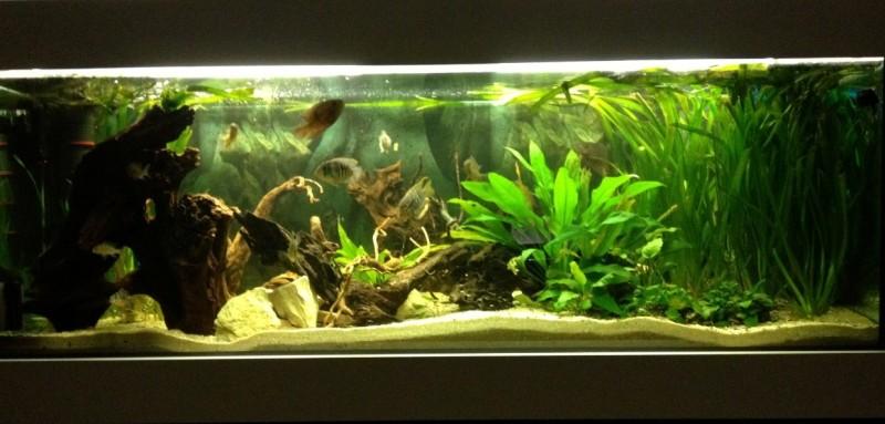 Community mein aquarium for Rundes aquarium
