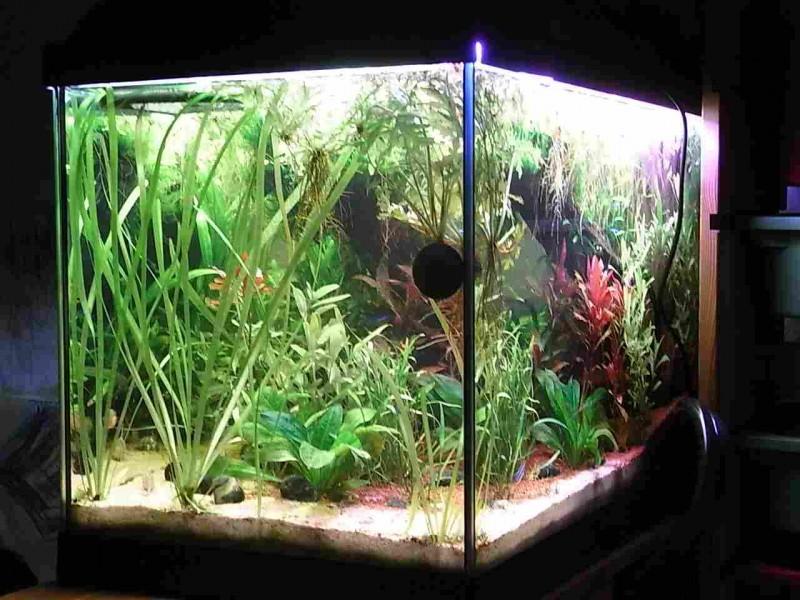 zu viel erlenzapfen im aquarium