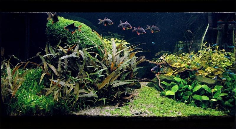 Community mein aquarium for Welche fische fur miniteich