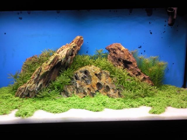insel aquarium