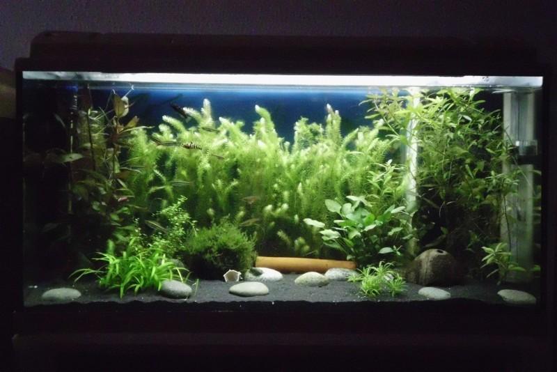aquarium dekoration beispiele m belideen. Black Bedroom Furniture Sets. Home Design Ideas