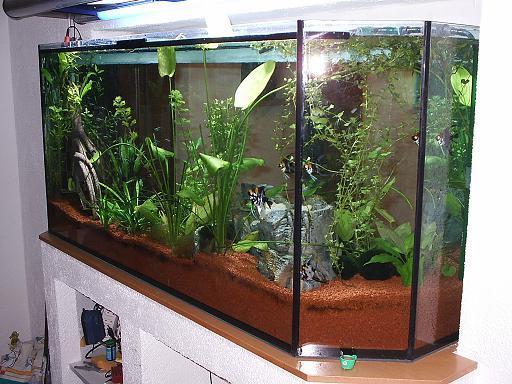 Community mein aquarium for Aquarium heizen