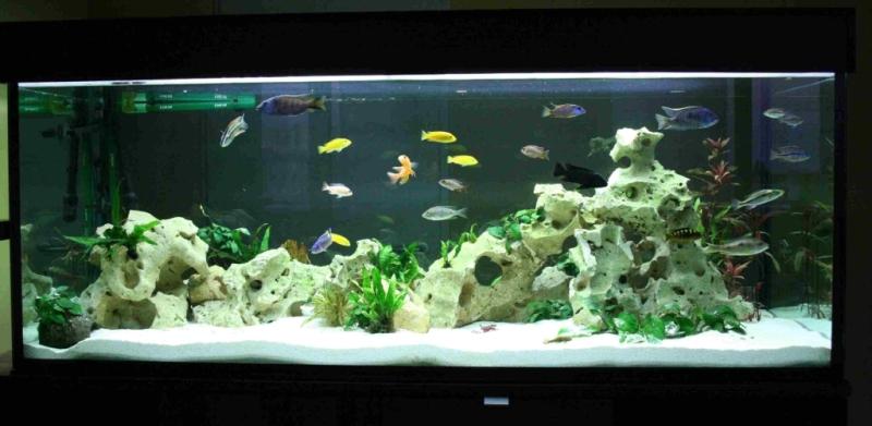 Community  Mein Aquarium   aqua4you de