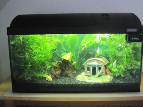 Community mein aquarium for Waterhome aquarium